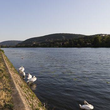 Profitez des bords de Saône !