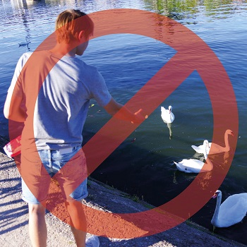 Ne nourrissez pas les animaux sauvages